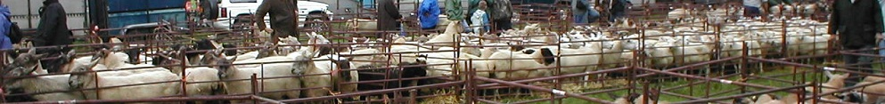 Priddy Sheep Fair